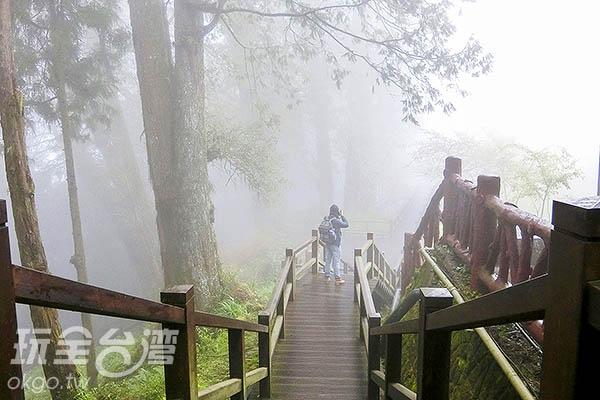 沿著森林步道,吸收芬多精/玩全台灣旅遊網特約記者陳健安攝