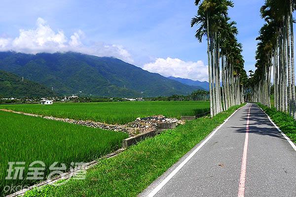 看著稻田初生萌發的碧綠,就讓人聯想到秋收時,稻穗隨風搖曳的金色風情。/玩全台灣旅遊網特約記者郭心怡攝