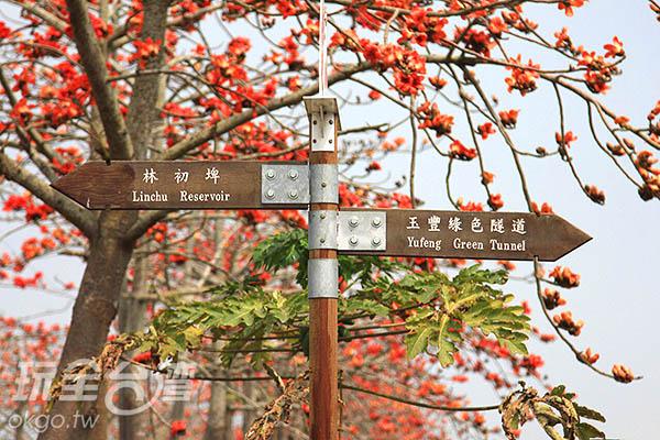 旅客們賞花之餘,還可以順道前往林初埤和玉峰綠  色隧道遊覽喔/玩全台灣旅遊網攝