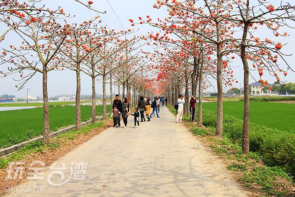 這裡可是攝影愛好者練習拍攝花景的知名勝地呀/玩全台灣旅遊網攝