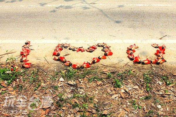 地面上有人用木棉花排列成『I LOVE U』的字型,  艷麗的紅色展現濃濃的愛意/玩全台灣旅遊網攝