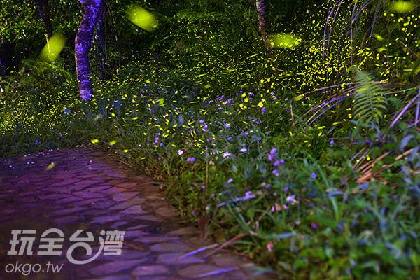 滿坑滿谷飛舞的螢火蟲,為數眾多/玩全台灣旅遊網攝
