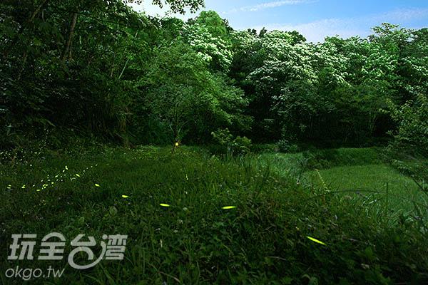 以高速攝影捕捉螢火蟲的飛行路徑/玩全台灣旅遊網攝