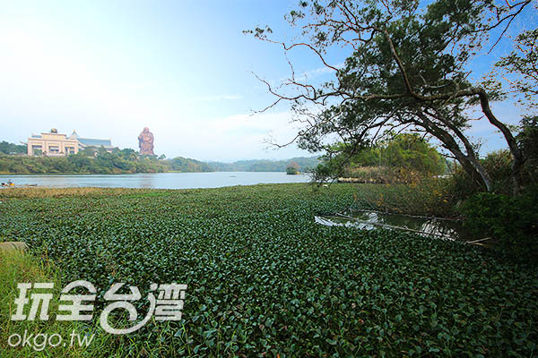 湖中孕育了許多豐富的動植物生態/玩全台灣旅遊網攝