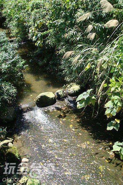 五月雪步道內乾淨的潺潺小溪孕育了螢火蟲生態/王沛雯提供