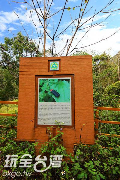 賞螢步道沿途設有詳細的螢火蟲生態告示解說/玩全台灣旅遊網攝
