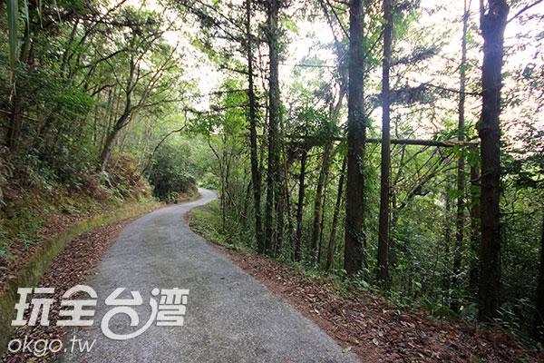 簡單的水泥路面兩旁為原始自然的植物生態/玩全台灣旅遊網攝