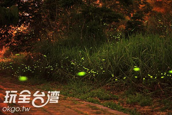 暮色中飛舞的螢火蟲成了黑夜中最亮的光芒/玩全台灣旅遊網攝