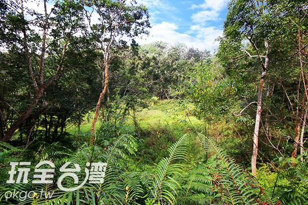 擁有保護良好的原始自然生態,才能給螢火蟲一個安心成長的好環境/玩全台灣旅遊網攝