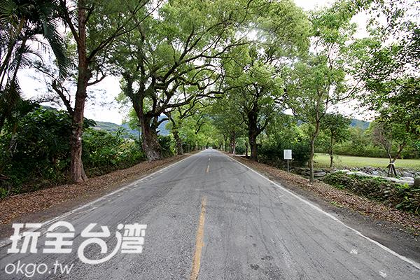 原為花東公路的綠色隧道景色宜人/玩全台灣旅遊網攝