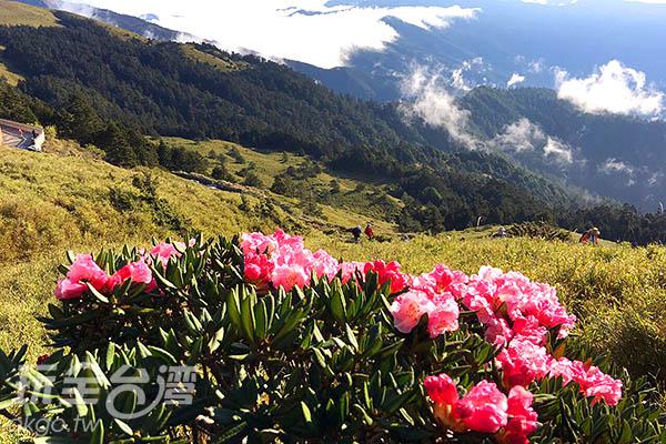 雲海繚繞的群山中夾帶著綠意原野,點上一抹紅/黃麗雯老師提供
