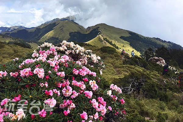 遊客們不停的在每一簇花叢間取景攝像/黃麗雯老師提供