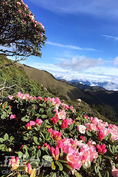 奇石、山嵐、雲海、花姿,怎麼拍怎麼美/黃麗雯老師提供
