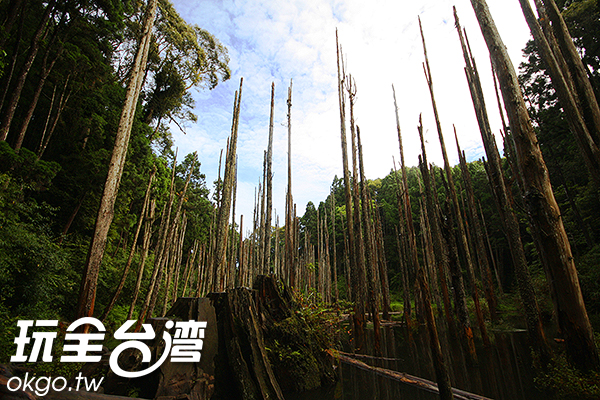 高聳的枯木有著特別的意境/玩全台灣旅遊網攝