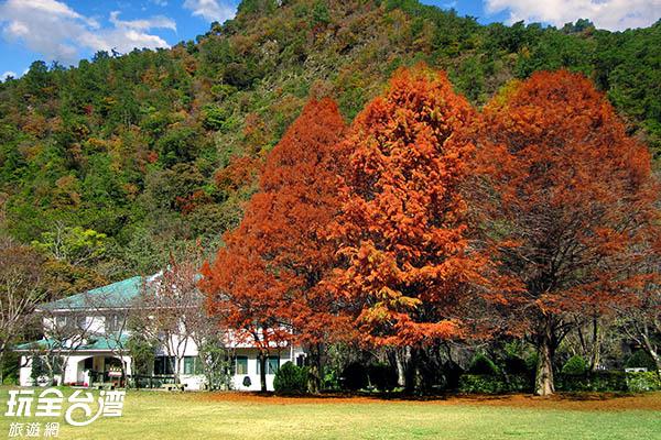 一年四季有不一樣的美景,此為楓紅 /玩全台灣旅遊網攝