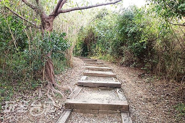 步道整理的相當乾淨,平緩易走,但有部分木棧道老舊失修,旅人行走時可要小心!/玩全台灣旅遊網特約記者蔡忻容攝