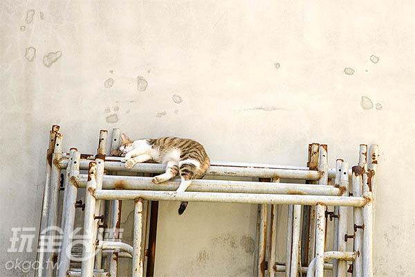 鹿港慵懶的氛圍,貓也愜意了/玩全台灣旅遊網特約記者陳健安攝