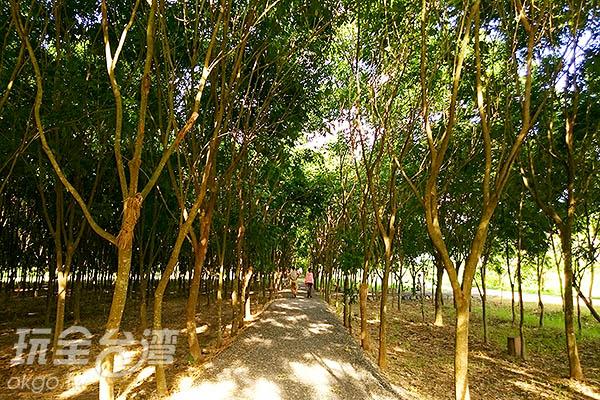 森林故事區有一長排的樹林環繞,走在其中不僅可以避暑、還可以吸取一些芬多精,空間也彌漫著浪漫的氛圍,蠻適合情侶散步與喜歡美拍的族群漫步其中。/玩全台灣旅遊網特約記者蔡忻容攝