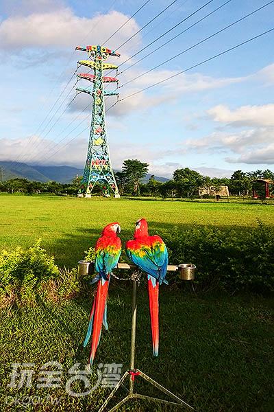 高壓電塔附近的草坪在假日的時候,會有飼養金剛鸚鵡的同好帶著自己的愛鳥來此訓練飛行,因此經常吸引許多遊客的目光,也成為這座園區的特色之一。/玩全台灣旅遊網特約記者蔡忻容攝