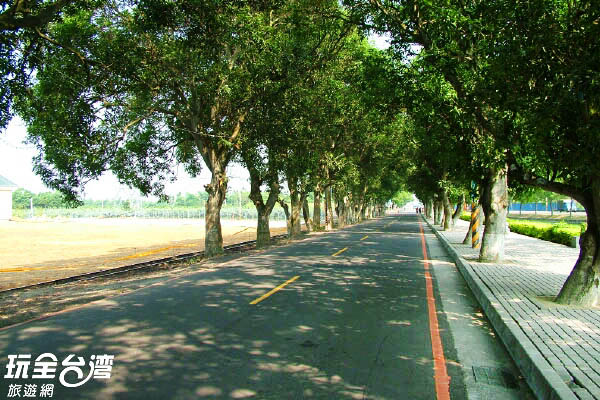 綠色隧道為種植約五十年的芒果樹組成/玩全台灣旅遊網攝