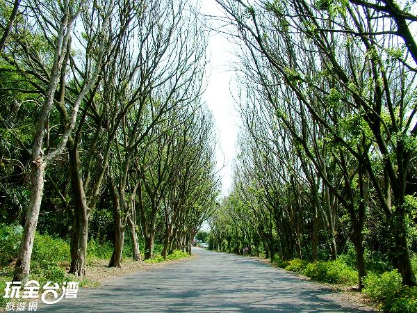 綠色走廊兩旁樹木林立,景色非常優美。/玩全台灣旅遊網攝
