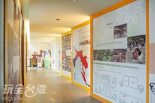 不只餵雞的餵雞體驗/玩全台灣旅遊網特約記者陳健安攝
