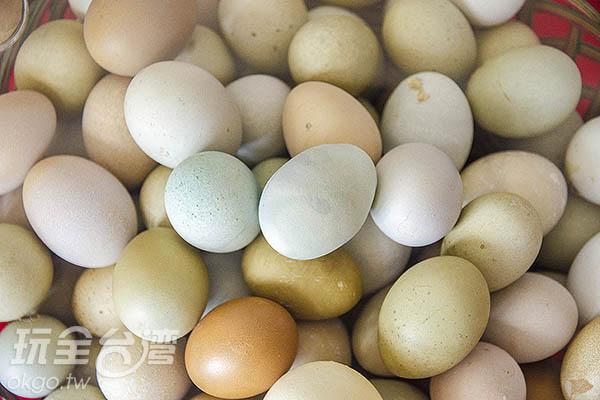 混合不同品種的雞孕育出五顏六色的彩色蛋/玩全台灣旅遊網特約記者陳健安攝