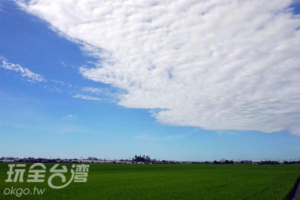 太保有機稻米專區種植無化學藥物的有機米/玩全台灣旅遊網特約記者許志模攝