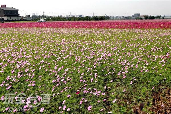 為防止周遭農藥隨風飛過來,因此種植許多花草,反而形成另一番景緻/玩全台灣旅遊網特約記者許志模攝