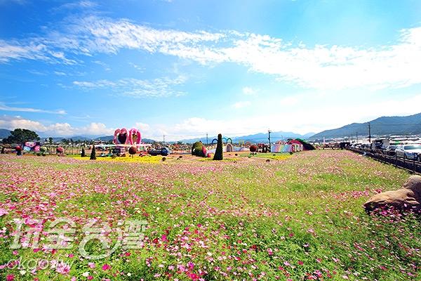 去年就這麼美麗,今年一定更令人驚艷!/玩全台灣旅遊網攝