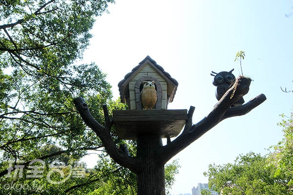 奧爾森學堂貓頭鷹吸引小朋友目光/玩全台灣旅遊網攝