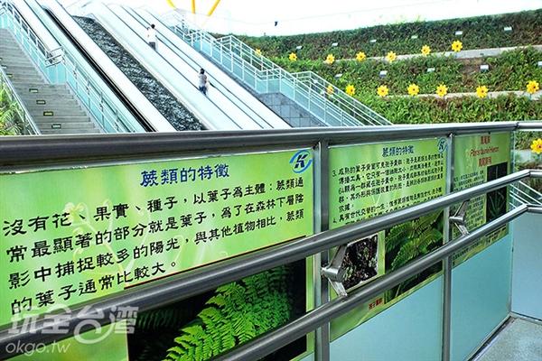 在階梯兩旁可見有關蕨類生態的知識與介紹,除了一睹中央公園捷運站的風采還能兼具學習性質喔。/玩全台灣旅遊網特約記者阿辰攝