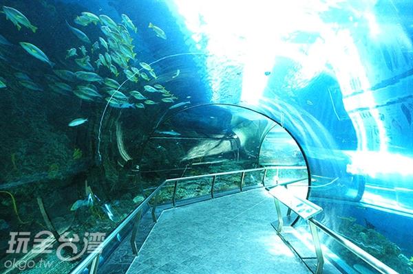 想像自己順著河流一起將台灣美麗的海底生態盡收眼底!/玩全台灣旅遊網攝