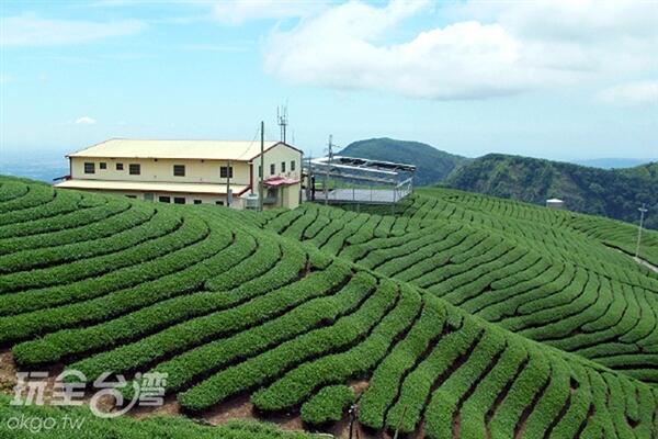 也為在大鞍竹海風景區內的八卦茶園是許多廣告取景之地/玩全台灣旅遊網攝
