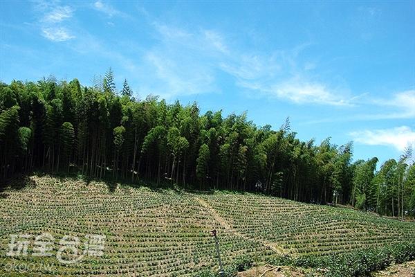 風景區內擁有大片竹林以及茶園/玩全台灣旅遊網攝