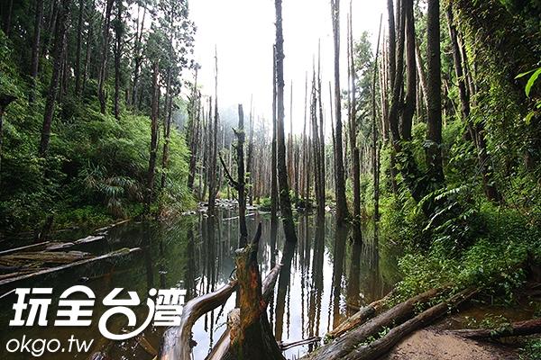 位在杉林溪附近的忘憂森林是許多文青外拍的地點/玩全台灣旅遊網攝