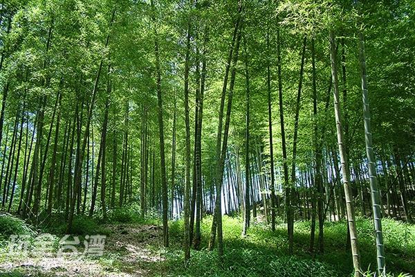 這清幽的景色是在拍電影嗎?感覺某個武林高手會從竹林的那一頭出現/玩全台灣旅遊網攝