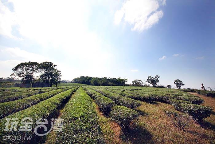 陽光、藍天加上茶園,美的像幅畫/玩全台灣旅遊網攝