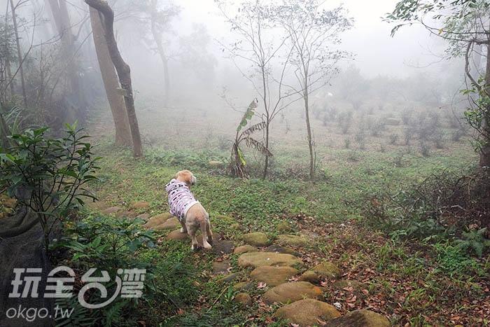 途中將穿越保存良好的林木群/玩全台灣旅遊網吳明倫攝