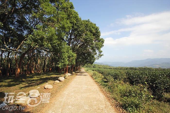 茶園小徑帶領旅人前往清新自在的世界裡/玩全台灣旅遊網攝