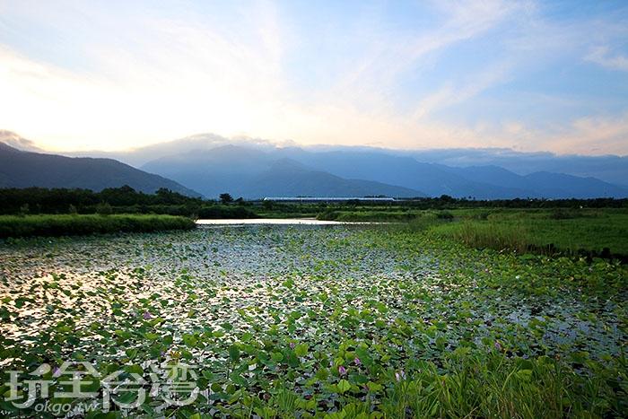 鹿野新良濕地/玩全台灣旅遊網攝