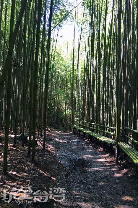 在桂竹林旁還可以見到由桂竹所製作而成的長椅,走累了就休息一會吧!/玩全台灣旅遊網特約記者smallting攝