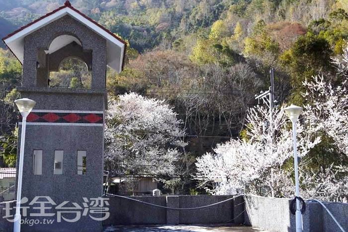 雪白色的霧社櫻搭配上尖頂的原住民特色建築,讓人彷彿置身的歐洲的美景之中。/玩全台灣旅遊網特約記者smallting攝