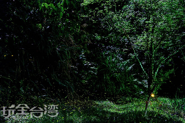 螢火蟲季/玩全台灣旅遊網攝