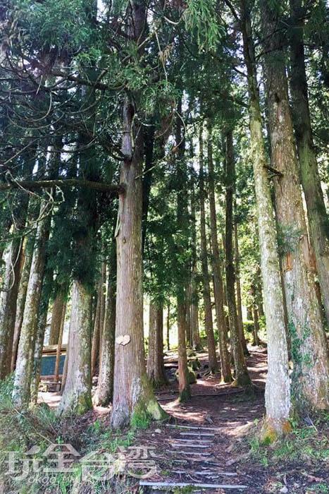 森林教室隱身於高聳的杉木林中,這裡有著相當豐富的自然生態環境。/玩全台灣旅遊網特約記者smallting攝