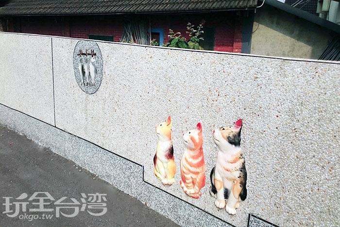 回頭看魚的貓兒們/玩全台灣旅遊網特約記者蔡忻容攝
