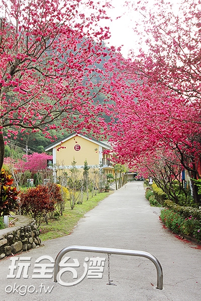 這不是國外,這是離台灣中心最近的埔里鎮/玩全台灣旅遊網攝