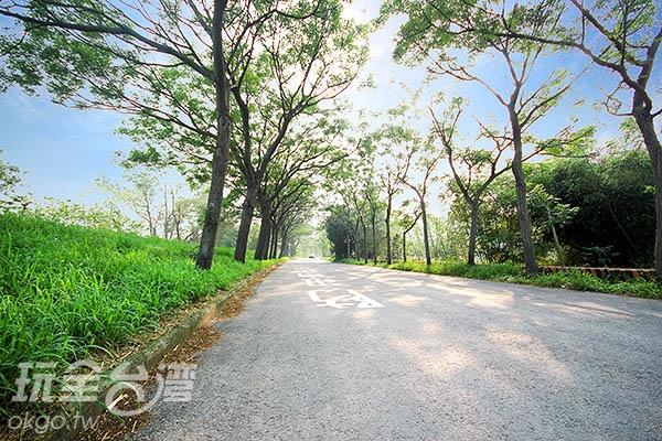 當苦楝花隧道盛開時,有著像是身在異國的浪漫風情/玩全臺灣旅遊網攝