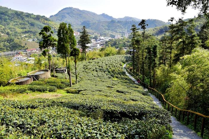雲南之道途中可見美麗茶園/玩全台灣旅遊網特約記者阿辰攝