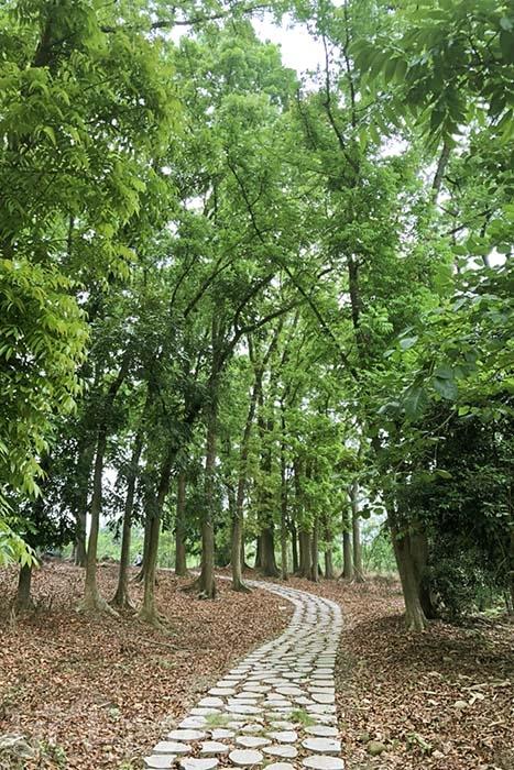 步道另一方向是充滿芬多精的綠色隧道,讓最天然的空氣清淨機,淨化你的身心靈/玩全台灣旅遊網特約記者阿湖與阿釵攝